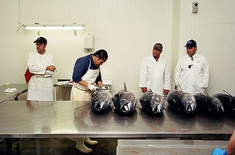 Bir 'ton balığı' hikayesi galerisi resim 14