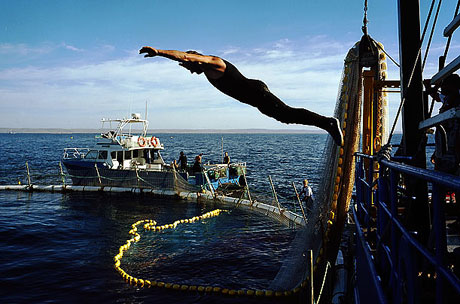 Bir 'ton balığı' hikayesi galerisi resim 4
