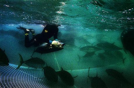Bir 'ton balığı' hikayesi galerisi resim 5
