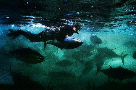 Bir 'ton balığı' hikayesi galerisi resim 7