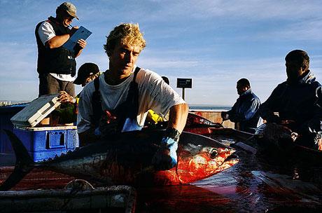 Bir 'ton balığı' hikayesi galerisi resim 8