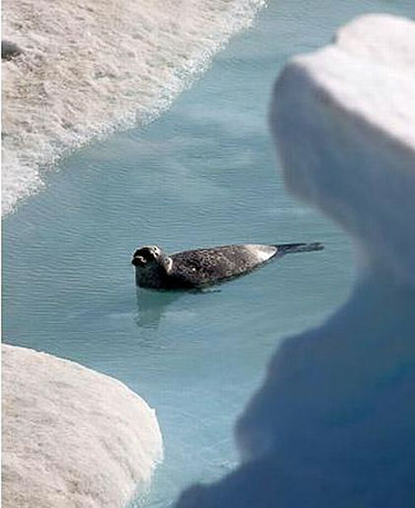 Petermann buzulu böyle eriyor galerisi resim 12