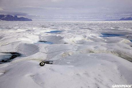 Petermann buzulu böyle eriyor galerisi resim 20