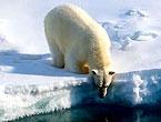 Petermann buzulu böyle eriyor