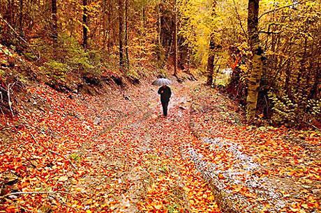 Yedi bölgeden sonbahar renkleri galerisi resim 4