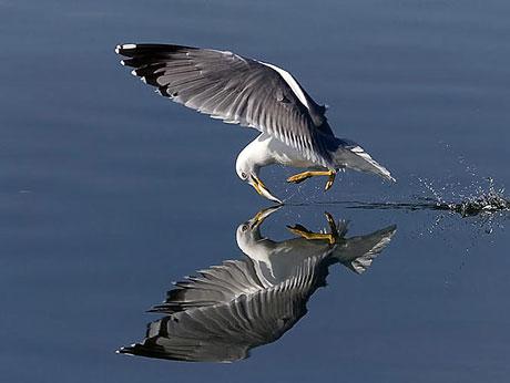 Kuşların dünyasına yolculuk galerisi resim 1