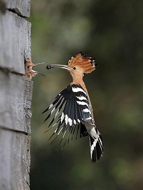 Kuşların dünyasına yolculuk galerisi resim 10