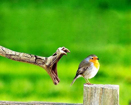 Kuşların dünyasına yolculuk galerisi resim 12