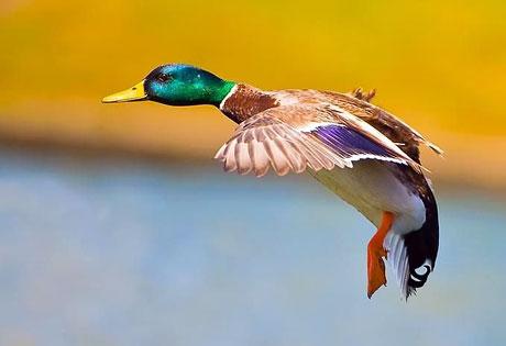 Kuşların dünyasına yolculuk galerisi resim 16