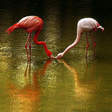 Kuşların dünyasına yolculuk galerisi resim 2