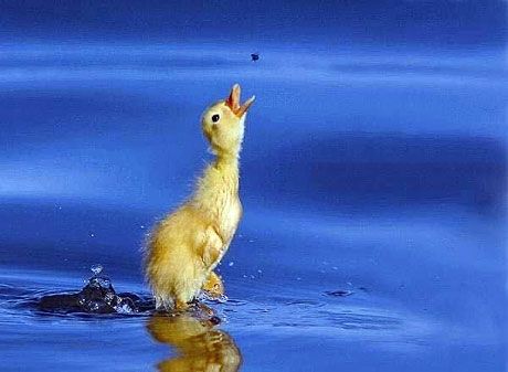 Kuşların dünyasına yolculuk galerisi resim 20