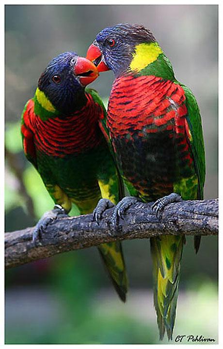 Kuşların dünyasına yolculuk galerisi resim 3