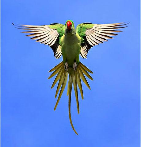 Kuşların dünyasına yolculuk galerisi resim 7