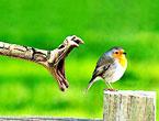 Kuşların dünyasına yolculuk