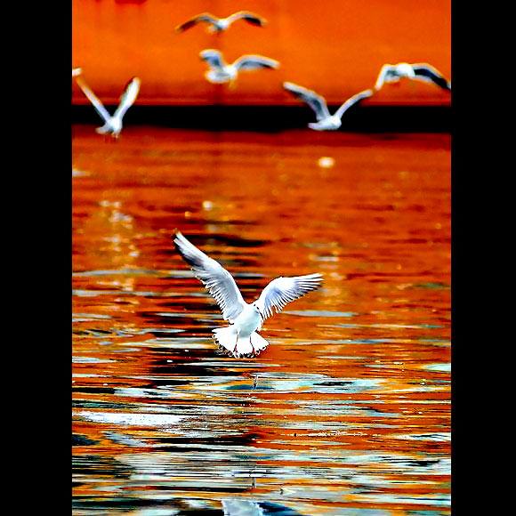 Martı'ların deniz'le dansı... galerisi resim 6