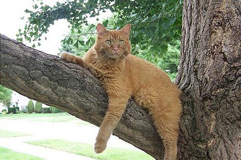 En güzel Kedi resimleri galerisi resim 1