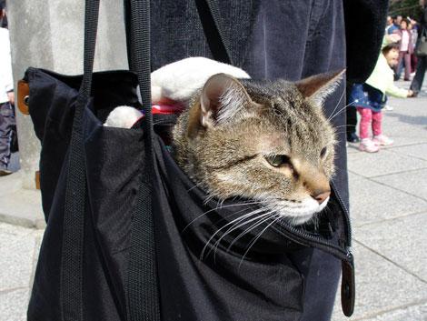 En güzel Kedi resimleri galerisi resim 11