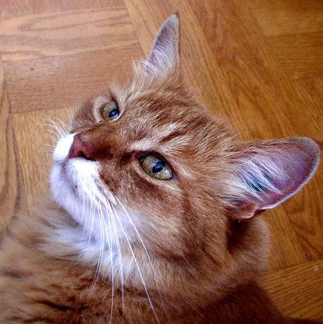 En güzel Kedi resimleri galerisi resim 12
