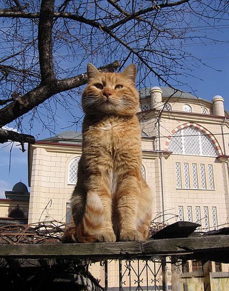 En güzel Kedi resimleri galerisi resim 13