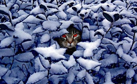 En güzel Kedi resimleri galerisi resim 4