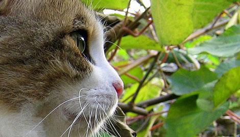 En güzel Kedi resimleri galerisi resim 5