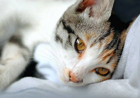 En güzel Kedi resimleri galerisi resim 7