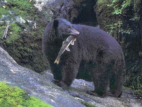Muhteşem hayvan fotoğrafları galerisi resim 10