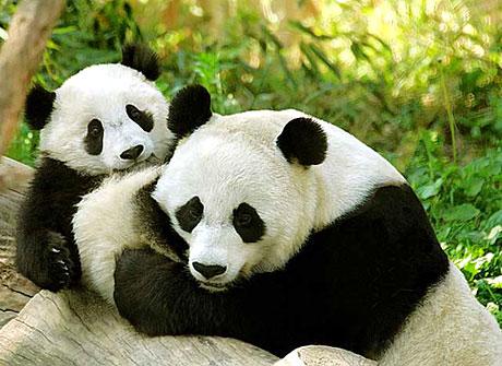 Muhteşem hayvan fotoğrafları galerisi resim 3