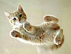 Muhteşem hayvan fotoğrafları