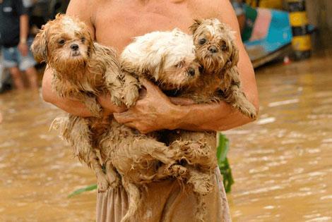 Filipinlerdeki Sel Felaketi galerisi resim 10