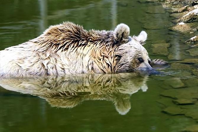 Bunalan hayvanlara yaz menüsü galerisi resim 10