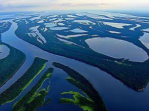 Vahşi Amazon