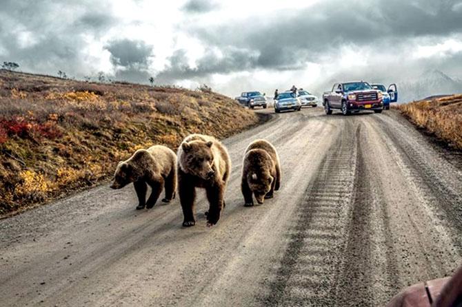 National Geographic 2016'nın en iyi karelerini açıkladı galerisi resim 28