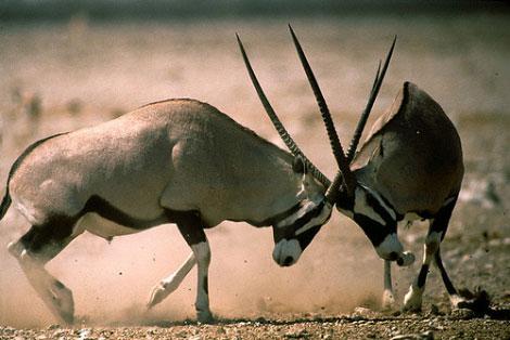 Hayvanların Öfkesi Başka Olur galerisi resim 2