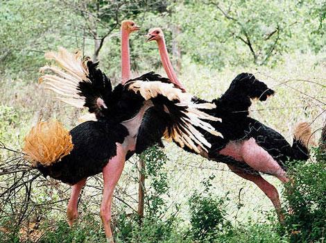 Hayvanların Öfkesi Başka Olur galerisi resim 9