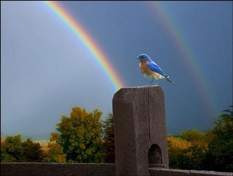 Doğadan Mükemmel Görüntüler galerisi resim 18