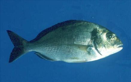 Hangi balık ne zaman yenir? galerisi resim 1