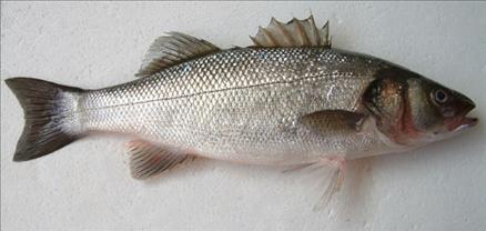 Hangi balık ne zaman yenir? galerisi resim 18