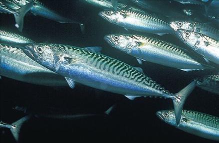 Hangi balık ne zaman yenir? galerisi resim 22