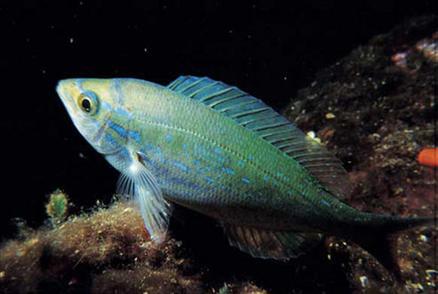 Hangi balık ne zaman yenir? galerisi resim 8