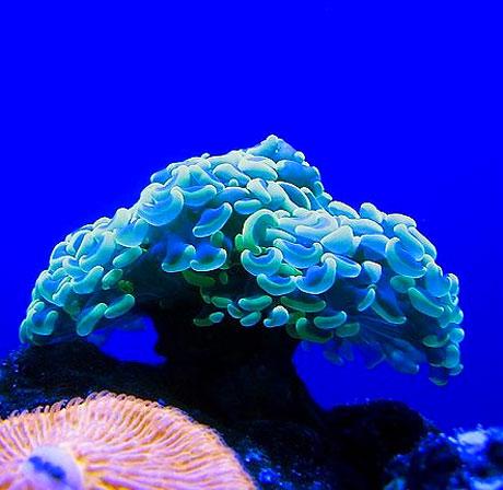 Denizin altından muhteşem görüntüler galerisi resim 10