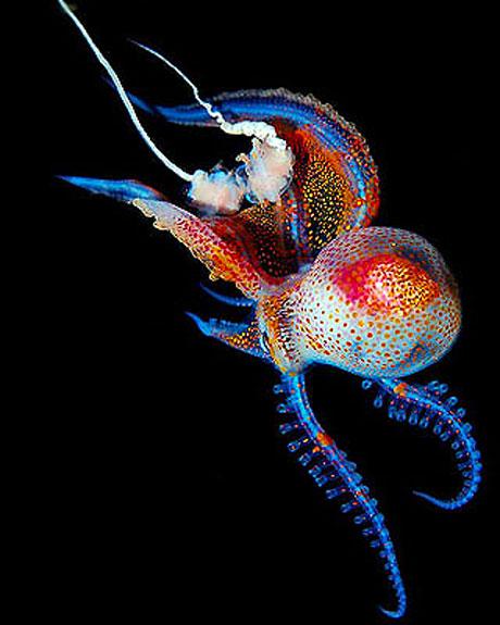 Denizin altından muhteşem görüntüler galerisi resim 2