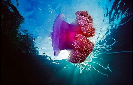 Denizin altından muhteşem görüntüler galerisi resim 5