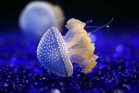 Denizin altından muhteşem görüntüler galerisi resim 7