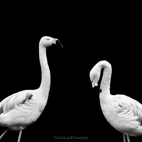 Siyah ve Beyaz galerisi resim 14