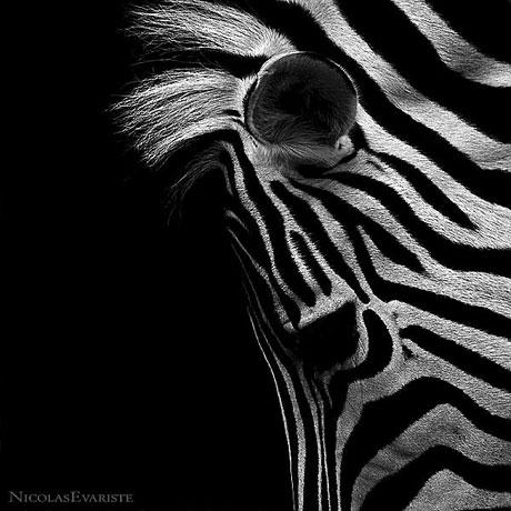 Siyah ve Beyaz galerisi resim 16
