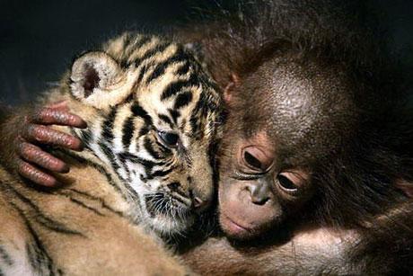Hayvanlar dünyasında neler oluyor? galerisi resim 26