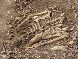 Diyarbakır'daki kazıda İnsan Kemikleri Çıktı