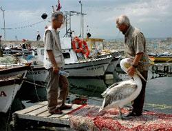 'Garip' pelikan'ın balıkçı dostları