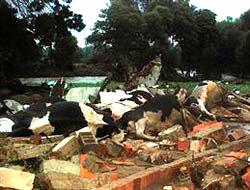 Tekirdağ'da kayıp 5 kişiden 1'inin cesedine ulaşıldı